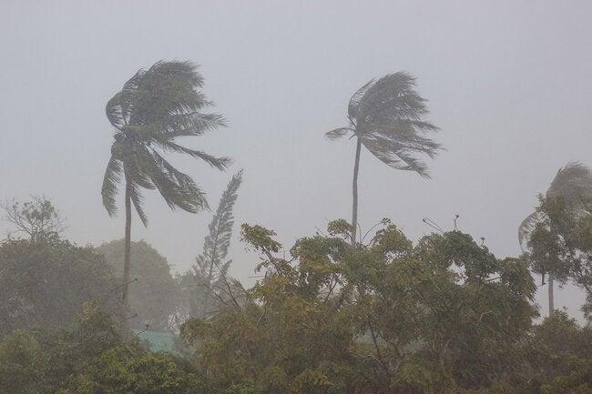 "PAHO urges countries to prepare for ""dual threat"" of hurricane season and COVID-19 thumbnail"
