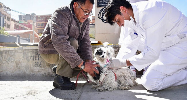 PAHO celebrates reduction in new cases of rabies in the Americas and calls for maintaining efforts to achieve elimination by 2022 thumbnail